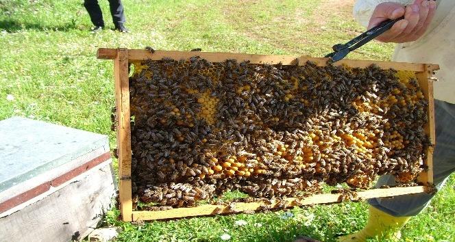'Üreticiden Tüketiciye Bal ve Arı Ürünleri İstanbul Günleri' etkinliği