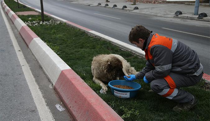 Sultanbeyli Belediyesi'nden sokak hayvanlarına mama desteği