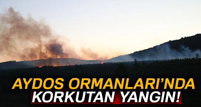 Aydos Ormanları'nda korkutan yangın