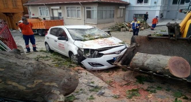 Şiddetli rüzgar, 400 yıllık anıt çınar ağacını aracın üstüne devirdi