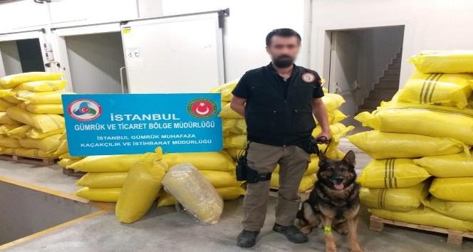 Sarımsak tozu arasında 60 kilo eroin yakalandı